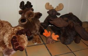Sugarcoated Moose on the loose