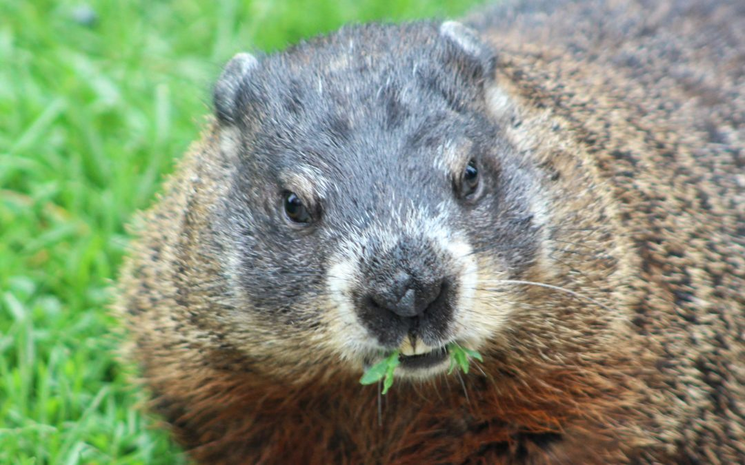 Escape from Groundhog Day and help the human herd