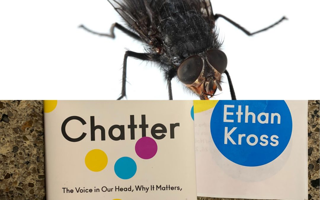 How being a fly on the wall helps you stop your chatter